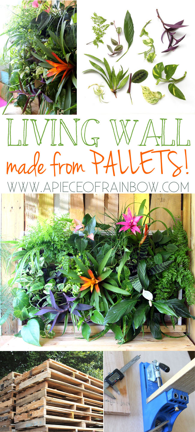 pallet-living-wall
