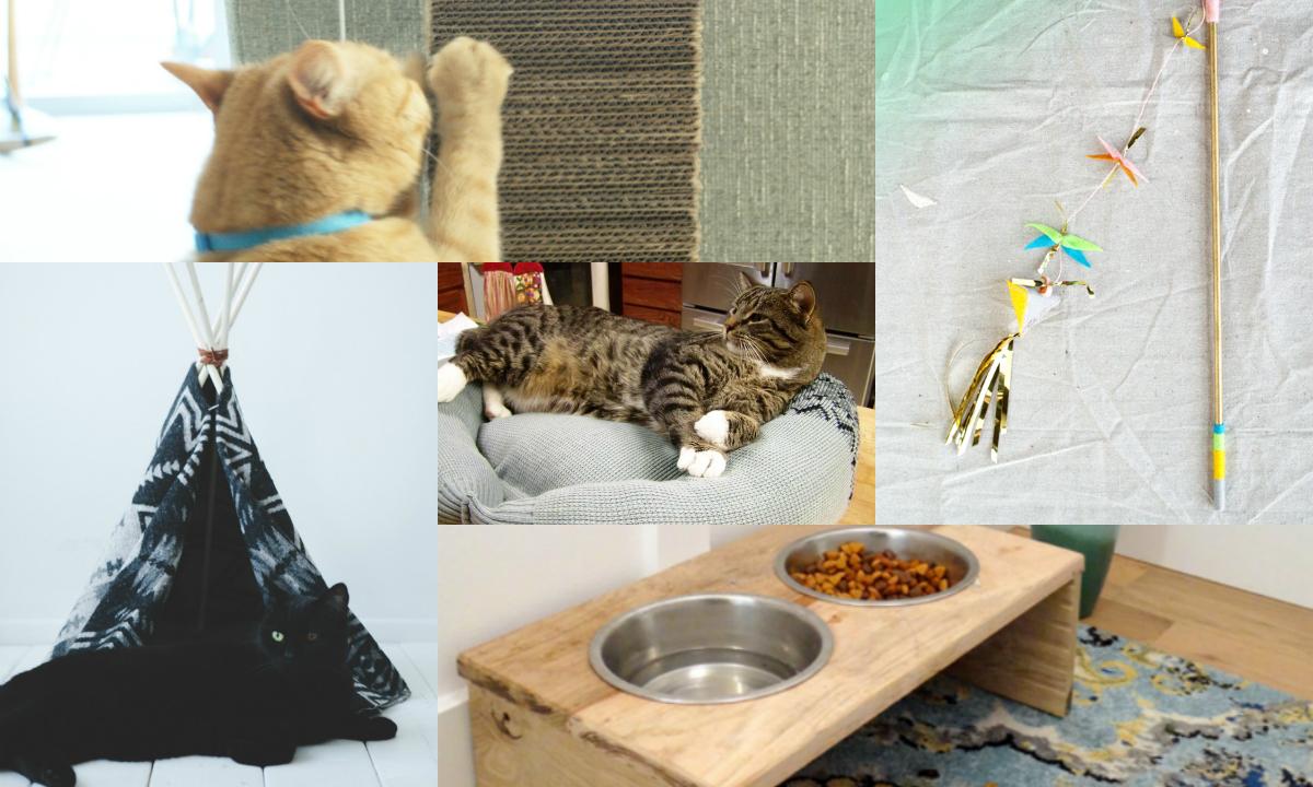 cat breeders in iowa
