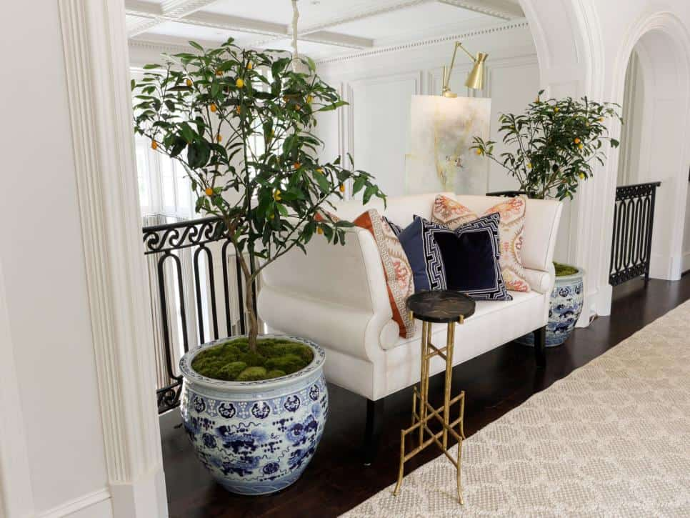 Indoor Houseplant Decor Inspiration 1 Pair Of Trees
