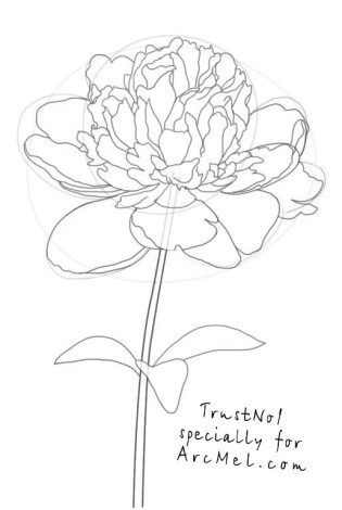 how to draw a peony