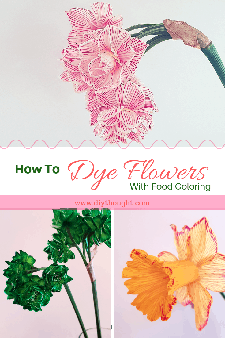Dyed Flower Using Food Coloring Diy Thought