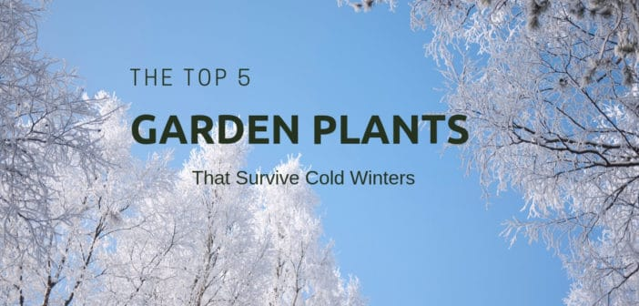 The Top 5 Garden Plants That Survive Cold Winters