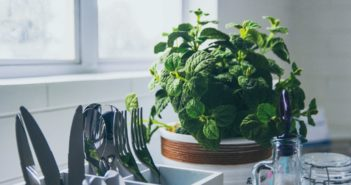Top 5 Herbs To Grow In Your Kitchen