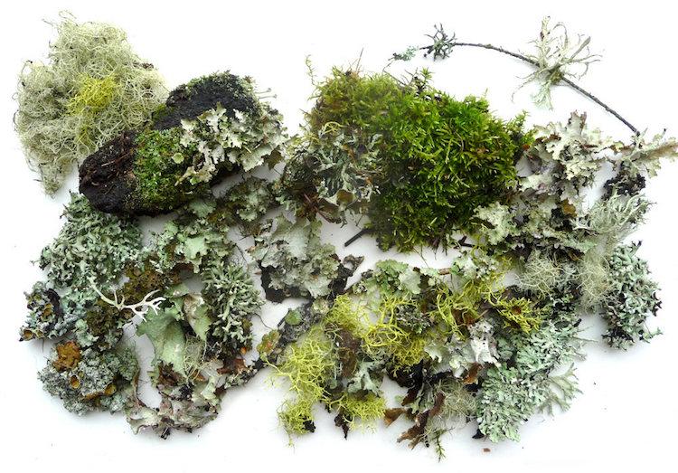 moss for terrarium