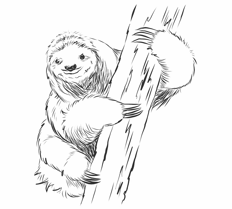 sketch book sloth tutorial