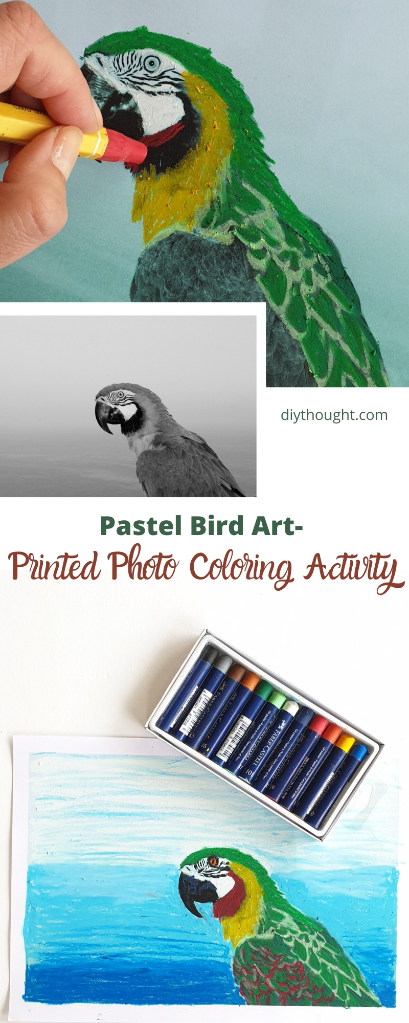 pastel bird art activity