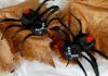 egg carton spider