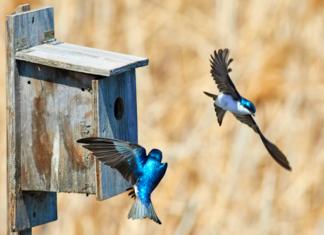 DIY birdhouse