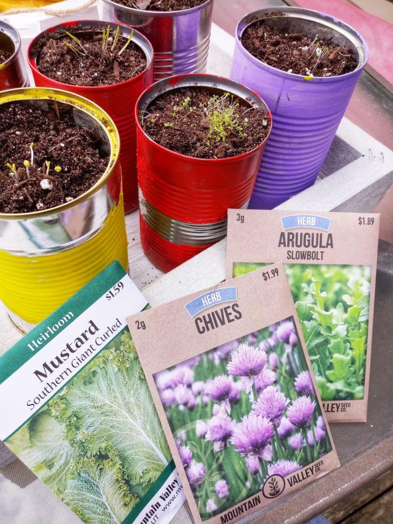 tin can herb garden