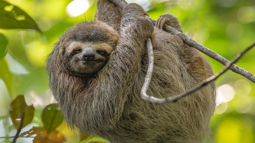 sloth day